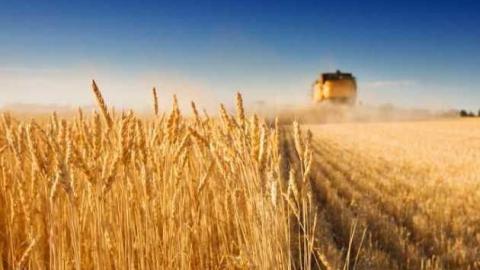 Алтайские аграрии намолотили неменее 3,7 млн тонн зерна