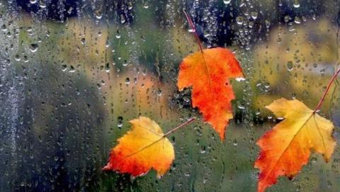 ВТюмени предполагается пасмурная идождливая погода