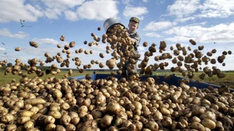 Саратовстат: Занеделю вобласти заметно упали вцене овощи