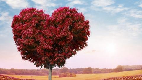 Дмитрий Тепин пообещал высадку деревьев взамен спиленных на«пешеходной Волжской»