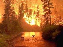 Медведев выделил Саратову 20 миллионов на борьбу с лесными пожарами