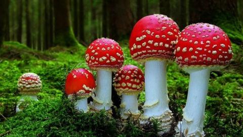 ВБалашове 5 человек отравились грибами, ребенок находится вреанимации