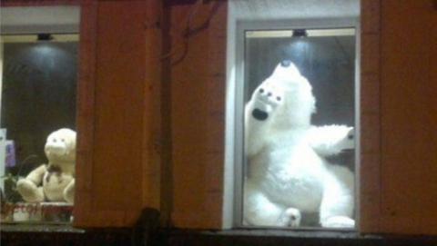 Полицейские словили похитителя медведя измагазина цветов