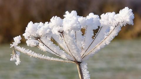 ВСаратовской области днем похолодает до