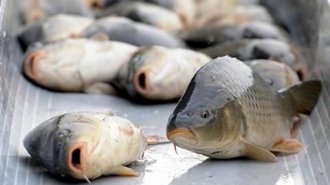 Вылов рыбы вСаратовской области побил 15-летний рекорд
