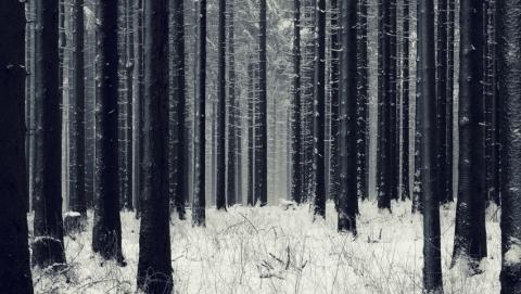 Пропавшего мужчину нашли мертвым в лесу под Татищево