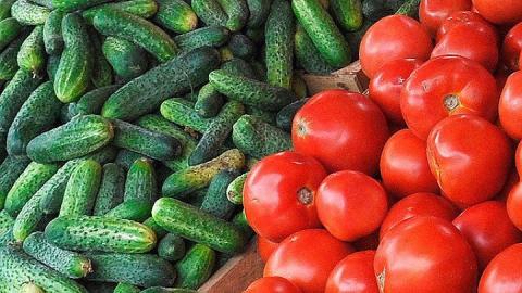 В Саратове уничтожили шесть тонн турецких помидоров и огурцов