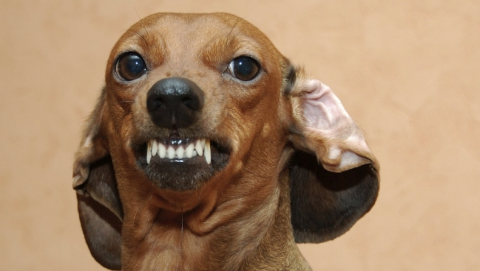 В Вольске на девушку напала домашняя собака