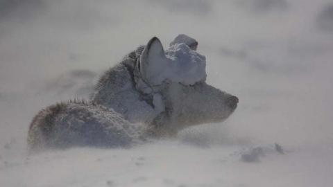 В Саратове похолодает до -18 градусов