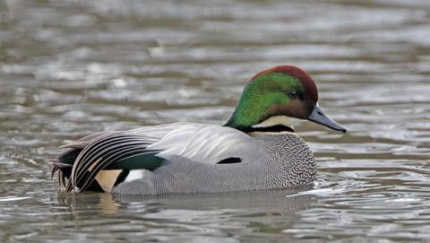 Росприроднадзор: птицы на Волге погибли из-за сброса нефтепродуктов
