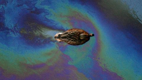 Пятно от нефтепродуктов на Волге под Саратовом продолжает расти
