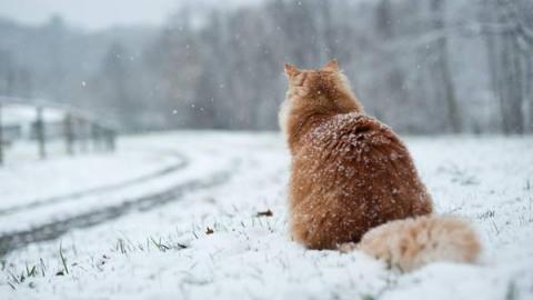 Днем в Саратове может пойти небольшой снег