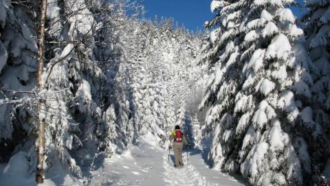 Лыжника с инсультом эвакуировали из леса в районе Октябрьского ущелья