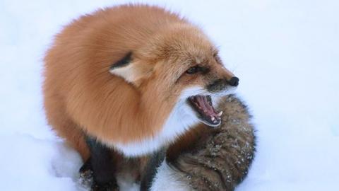 В регионе наблюдается спад бешенства среди животных
