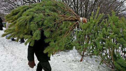 Саратовцев приглашают за дешевыми елками