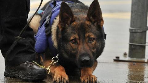 Собака помогла задержать пытавшегося ограбить дом рецидивиста