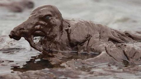 Причиной гибели уток на нефтяном пятне стало переохлаждение