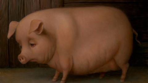 В Саратовской области выявлен очаг чумы свиней