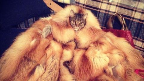 В Саратовской области в субботу похолодает до -35