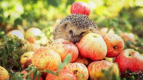 В Балакове из магазина изъяли 200 килограмм карантинных яблок