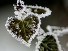 Прогноз погоды на 12 ноября. Ночные заморозки усиливаются