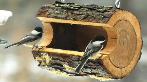 Саратовцам бесплатно раздадут эко-кормушки для птиц