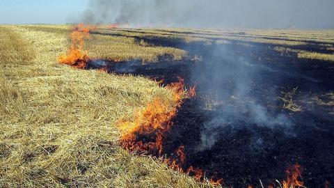 Из-за ленивого пожарного произошло возгорание пяти земельных участков