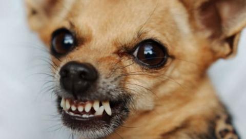 В Вольске бездомный пес напал на маленькую девочку