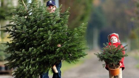В Саратове оштрафованы продавцы нелегальных елок и фейерверков