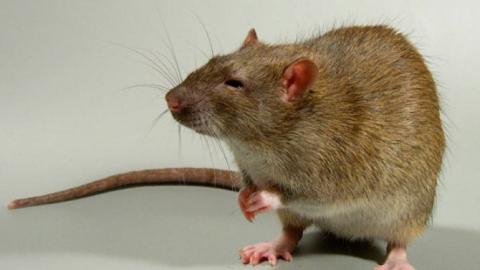 Годовалый мальчик отравился крысиным ядом