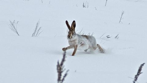 Выстрел по зайцу отрикошетил охотнику в глаз