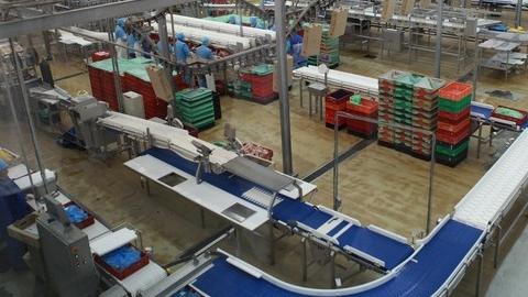 Руку рабочего птицефабрики затянуло втранспортер поуборке помета