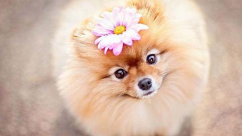 Мошенница «заработала» наторговле щенками дворняжек больше 20 000 руб.