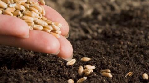 """В пресс-центре """"МК обсудят обеспечение области семенами к посевной и перспективы импортозамещения в данной сфере"""