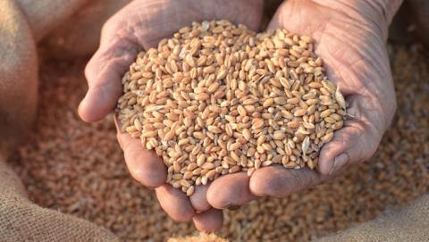 В Саратовской области хотят получить урожай в 4,3 миллиона тонн зерна