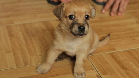 Саратовчанка выдала дворняжку за породистую собаку и продала за 4 тысячи