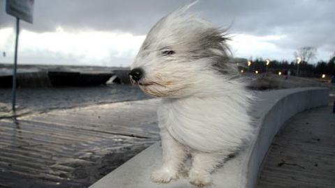 МЧС: Завтра вСаратове будет дуть очень сильный ветер
