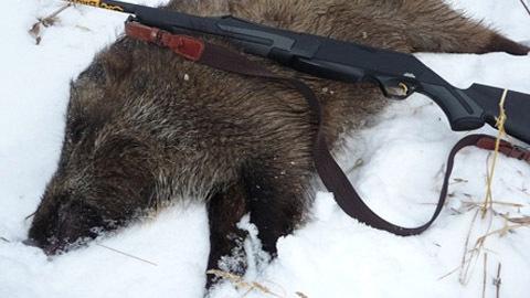 Под Саратовом задержали браконьера стушей кабана икарабином