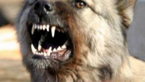 Саратовец пытался натравить собаку наприставов