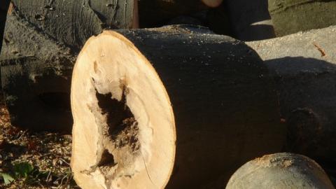 Саратовцам предлагают жаловаться на гнилые деревья через интерактивный сервис