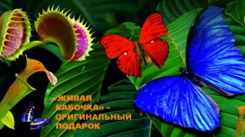 """Саратовцев приглашают на выставку """"Живые тропические бабочки и хищные растения"""""""