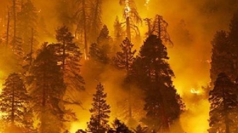 Ссамого начала года вСаратовской области случилось 4 лесных пожара