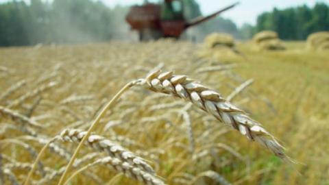 Молодым аграриям могут увеличить суммы выплат в рамках господдержки