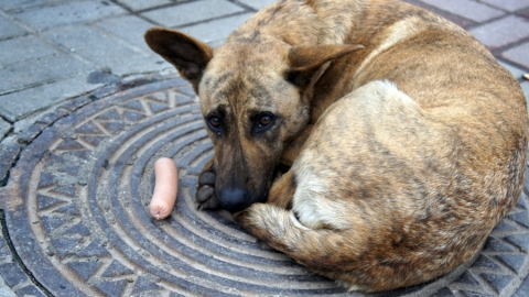 ВСаратове ссамого начала года отловили 900 бездомных собак