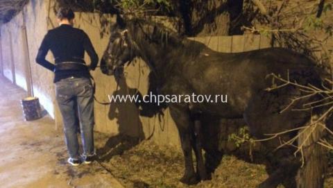 В Саратове «Приора» наехала на лошадь с беременной наездницей