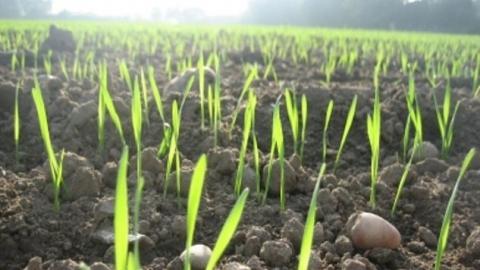 Первый миллион гектаров яровых культур посеяли в Саратовской области