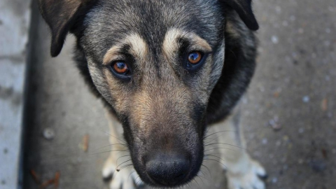 В Саратове за прошедшую неделю поймали 71 бездомного пса
