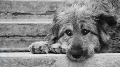 За прошедшую неделю в Саратове поймали 101 бездомную собаку