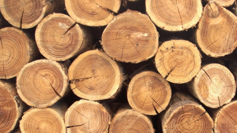 Минприроды объяснило малоэффективность по использованию лесов отсутствием арендаторов