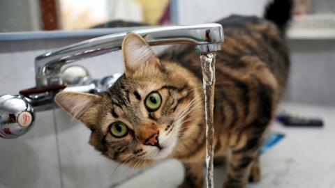 Саратовцев предупреждают о масштабном отключении холодной воды